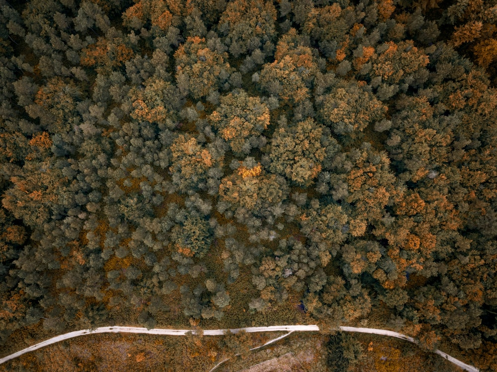 orange and green tree beside a road aerial view photography