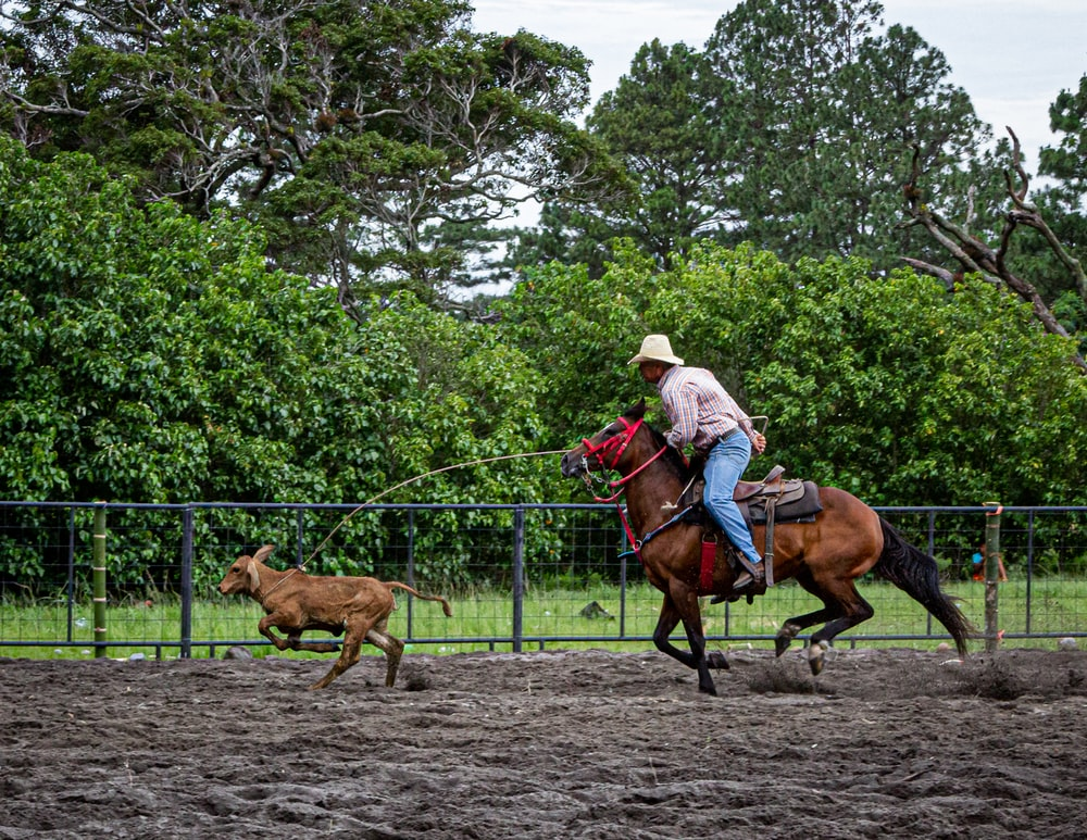 person riding a horse during daytime