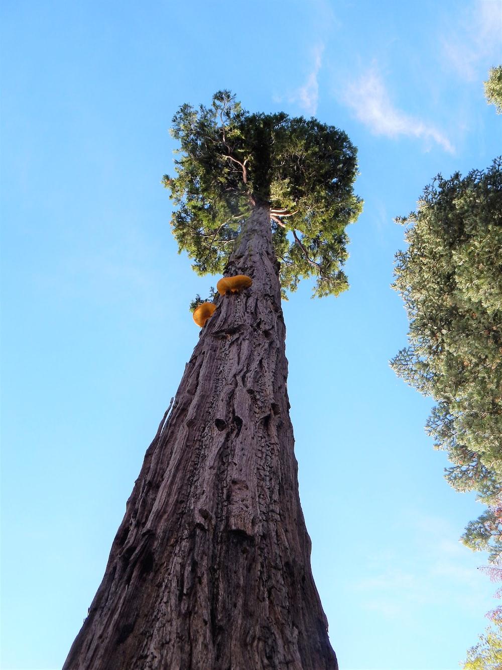 low-angle photo of tree
