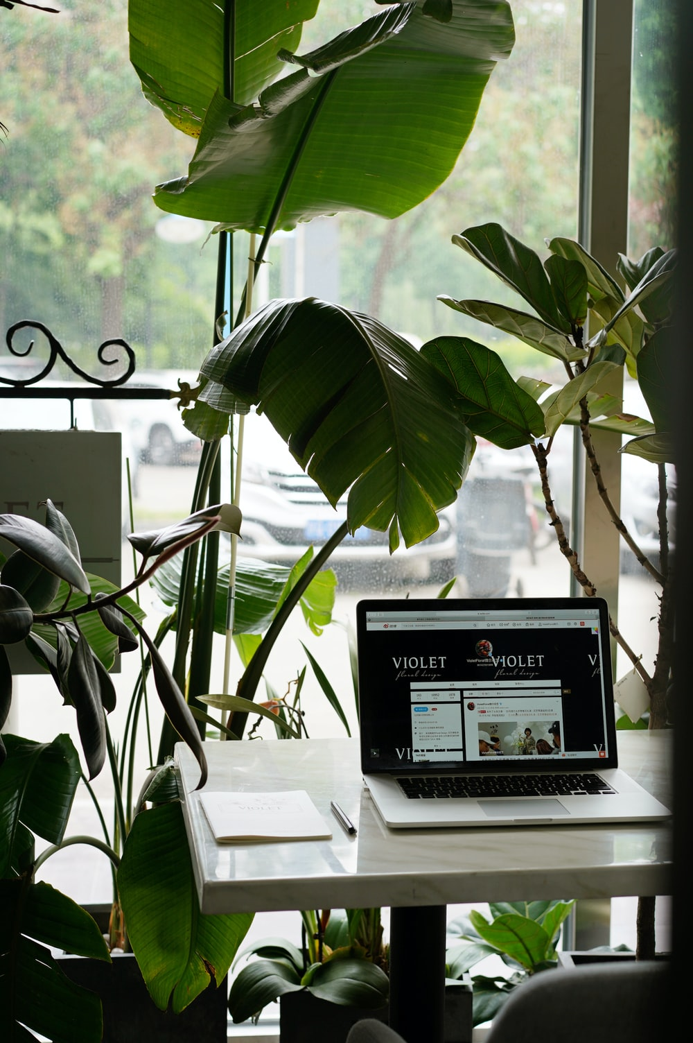 green-leafed plant near laptop and desk