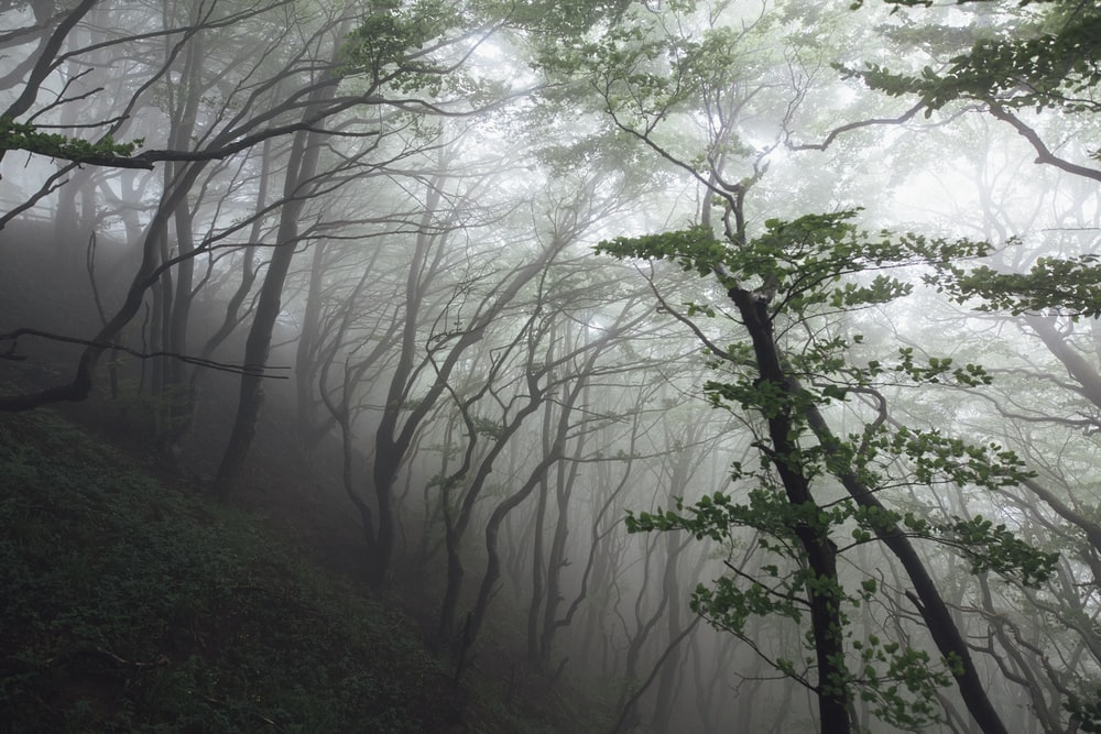 green trees during foggy weather