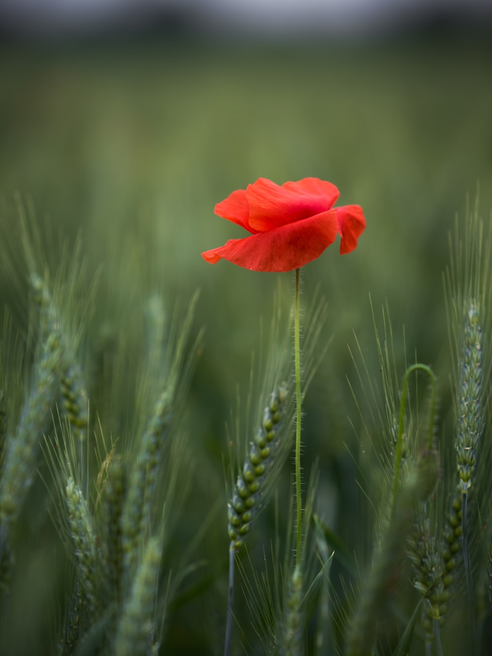 selective focus photography of red flower