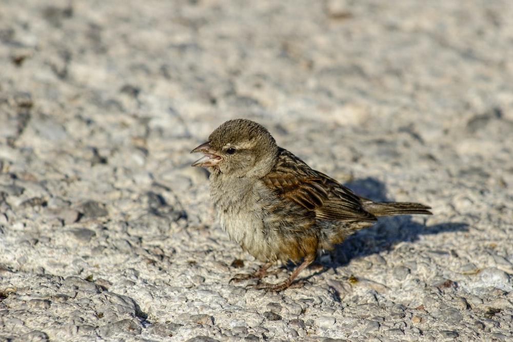 brown bird on rock