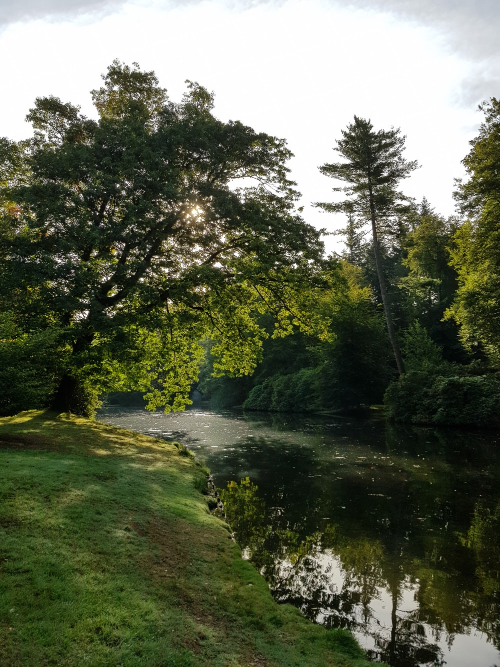 pond surrounded with tall and green trees under white skies
