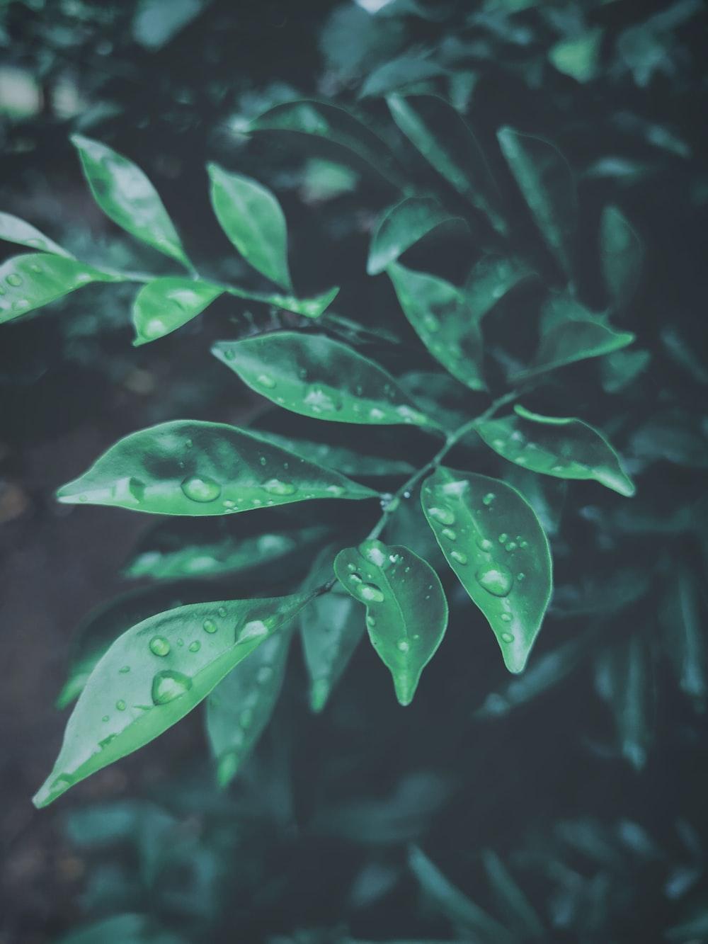 dew drops on green tree leaves