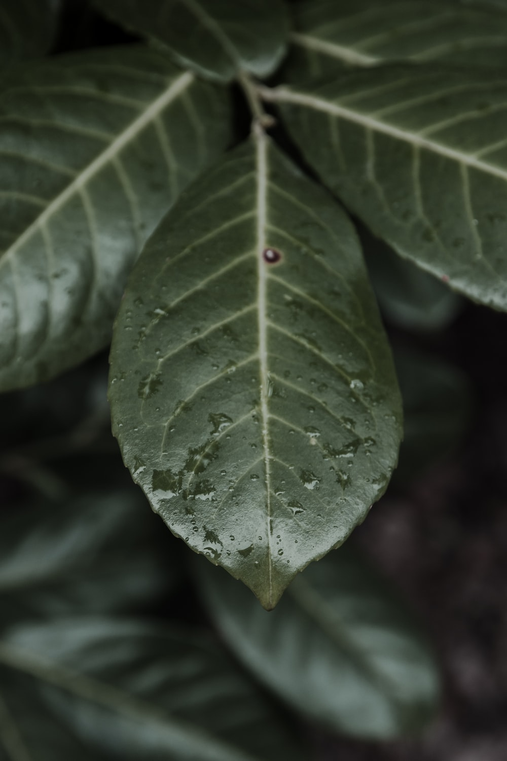 ovate green leaves