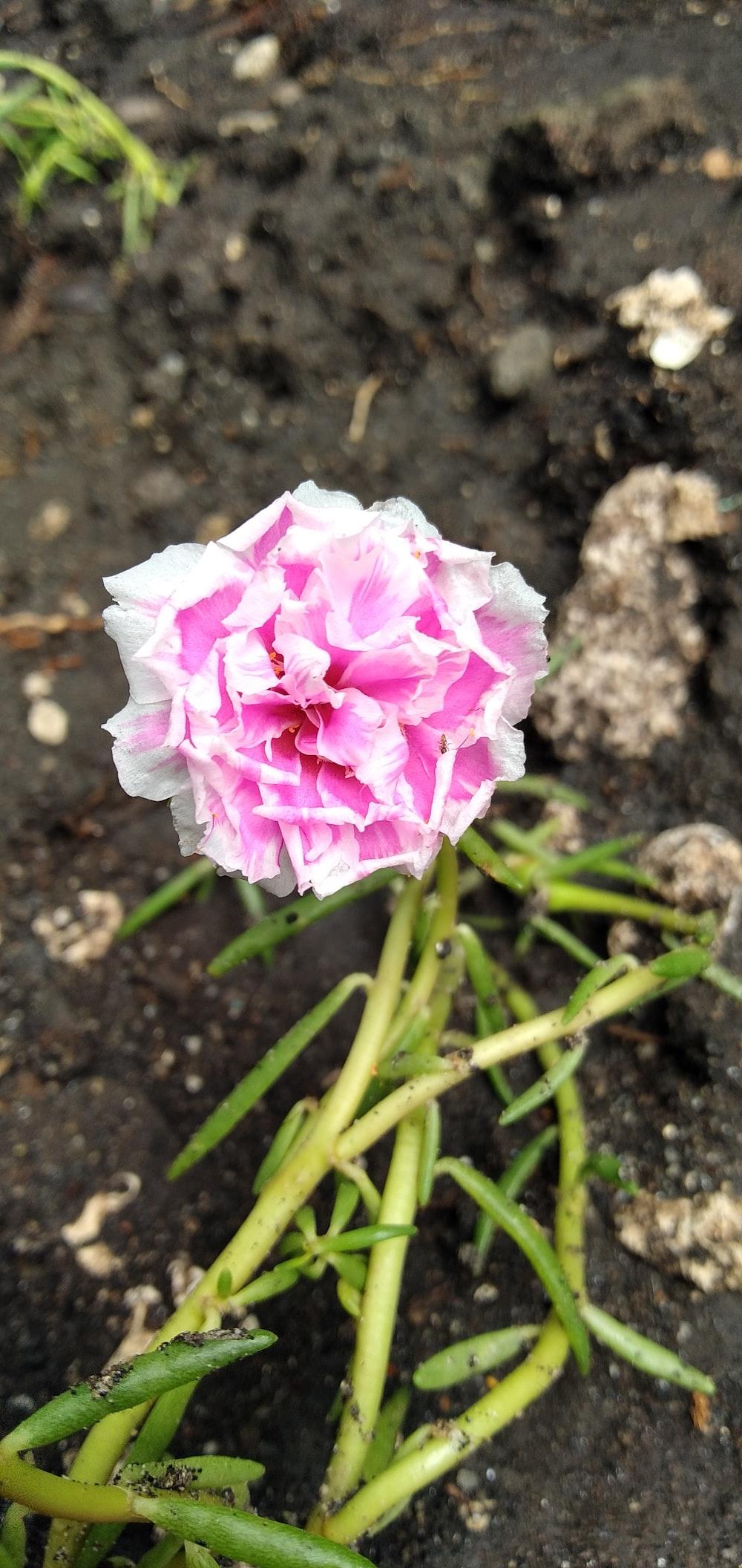 pink petaled flower during daytime