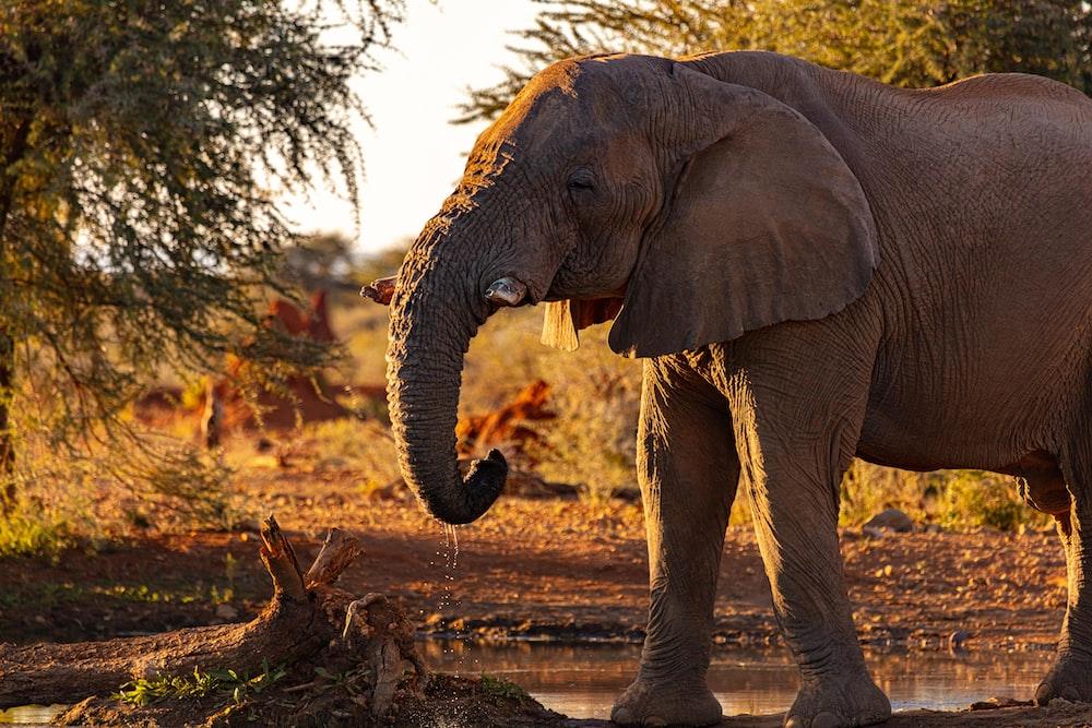 brown elephant near trees