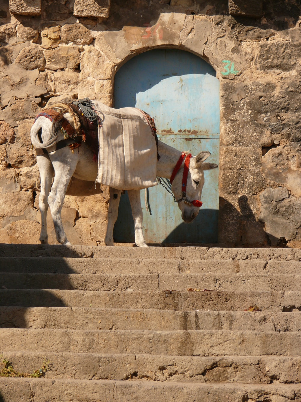white donkey in front close door
