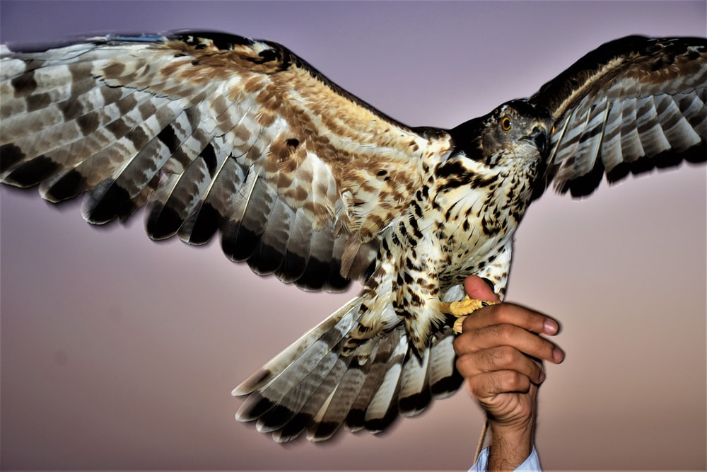 eagle perched on person's hand