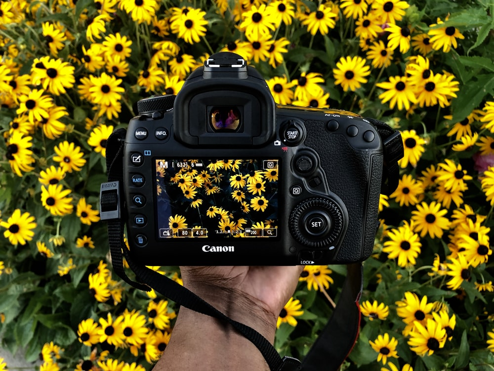 person holding Canon camera taking photos of yellow petaled flower