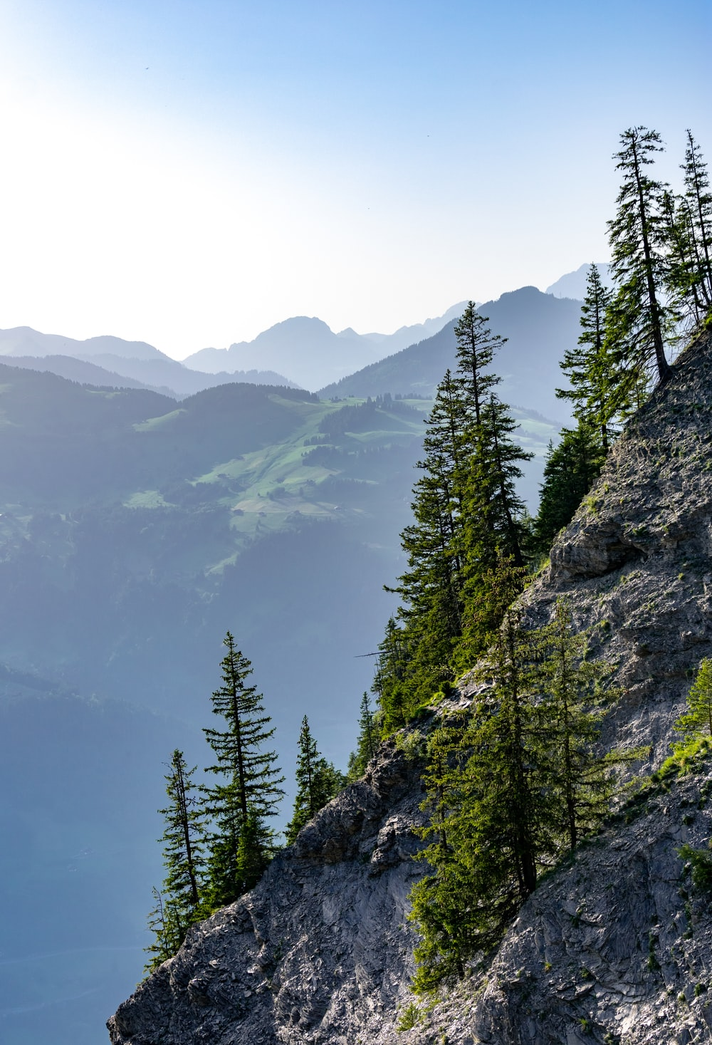 landscape photo of trees at a mountainside