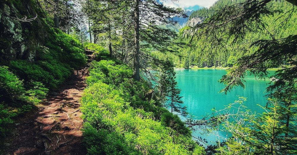 road beside lake