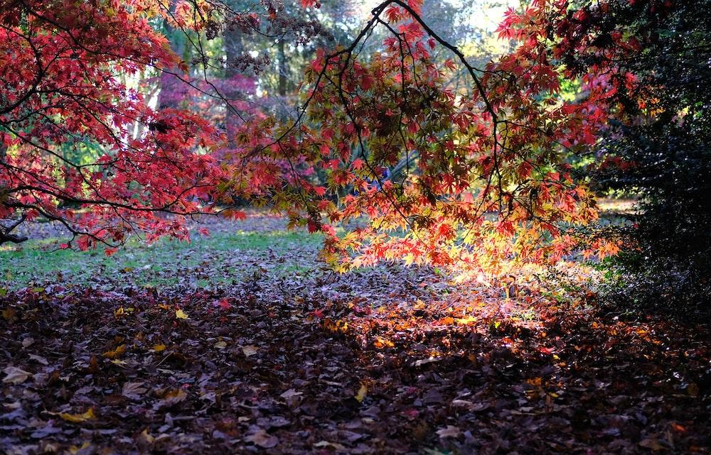 multicolored-leafed tree