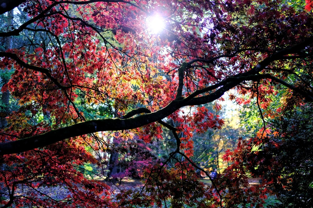 trees under sunlight during daytime