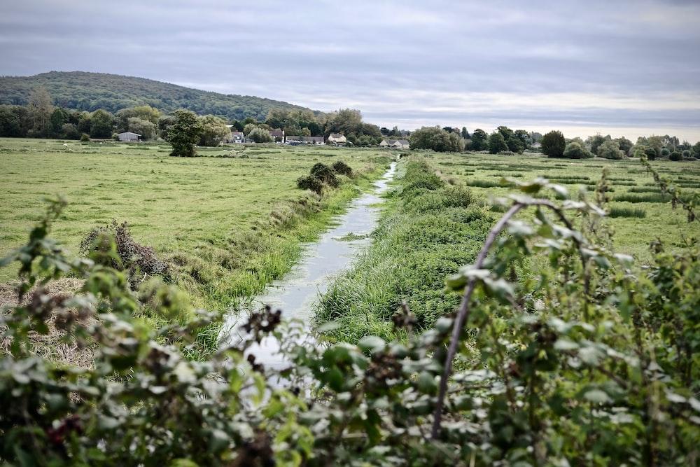 landscape photo of a stream among grass fields