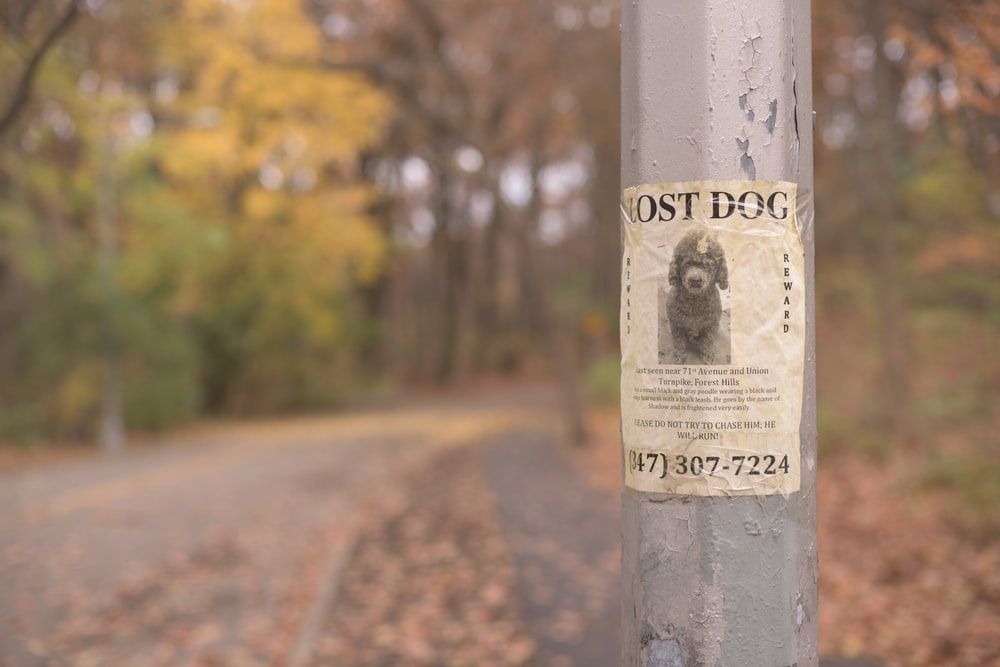 Lost Dog poster in a pole during daytime