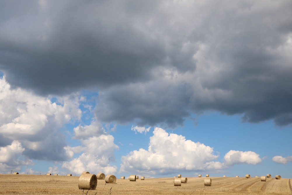 brown sod under white clouds and blue sky during daytime