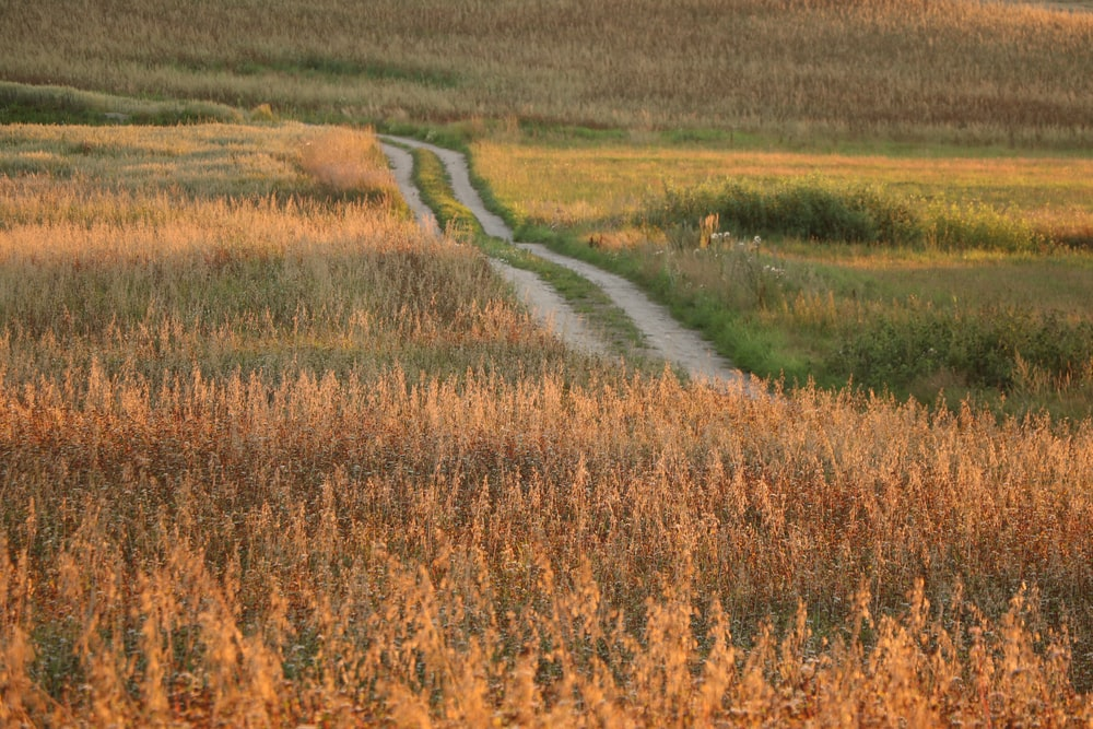 pathway between brown field