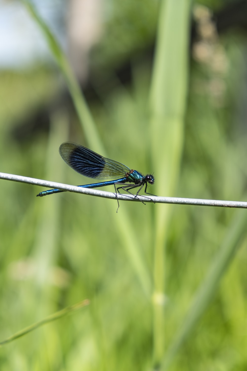 green dragonfly in a stick during daytime close-up photography