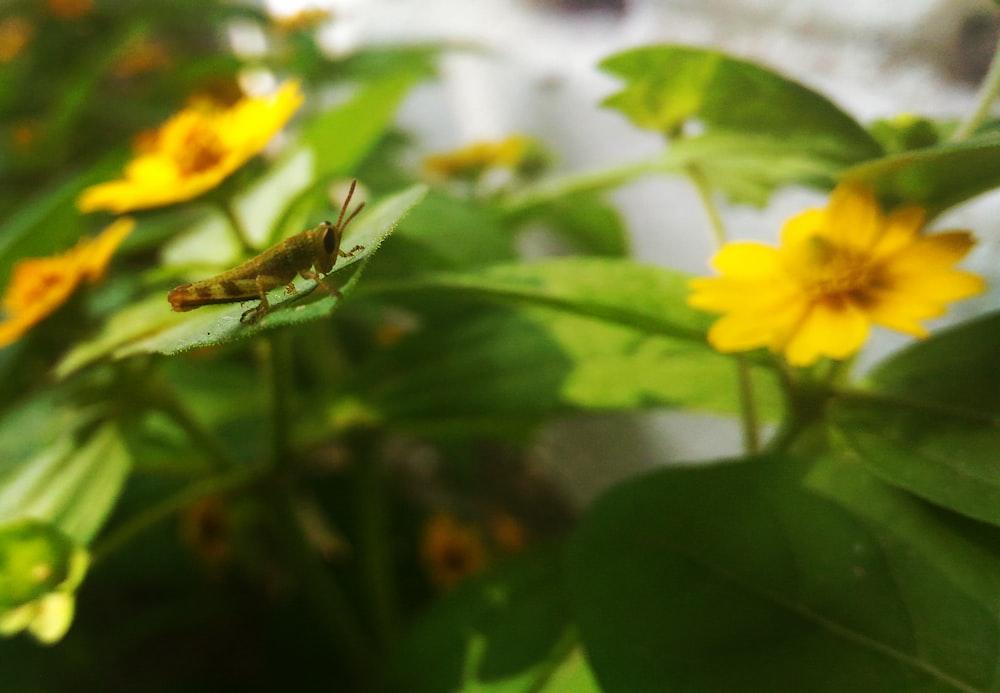 green grasshopper on green-leafed plant