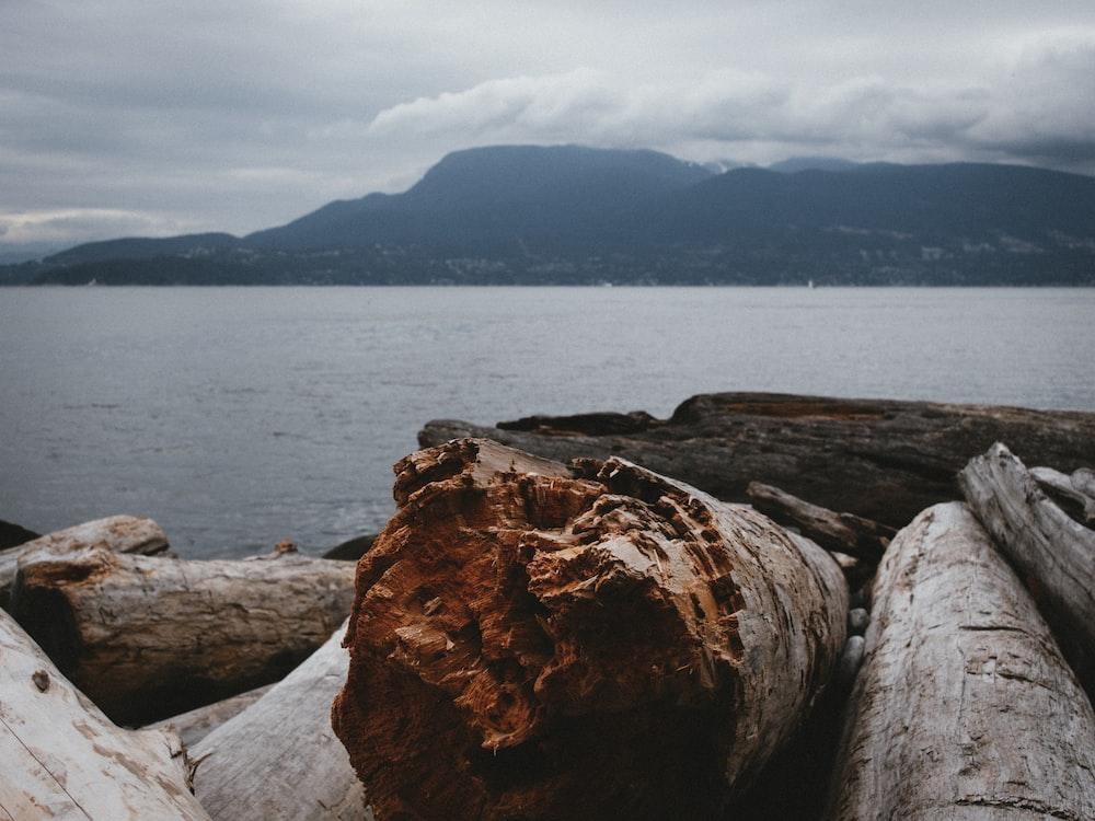 tree logs near body of water