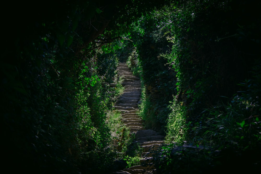 narrow pathway surrounded by green plants