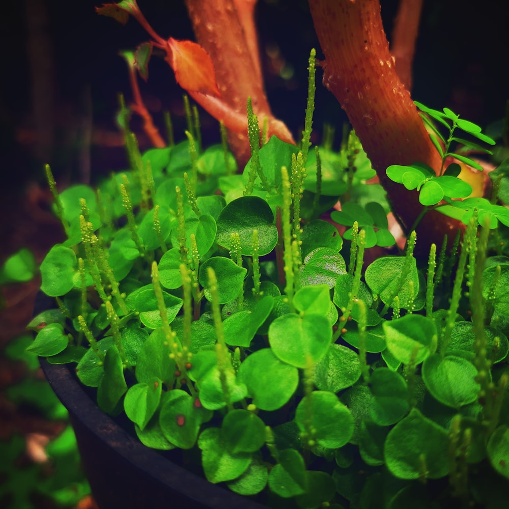 green-leafed plant on pot
