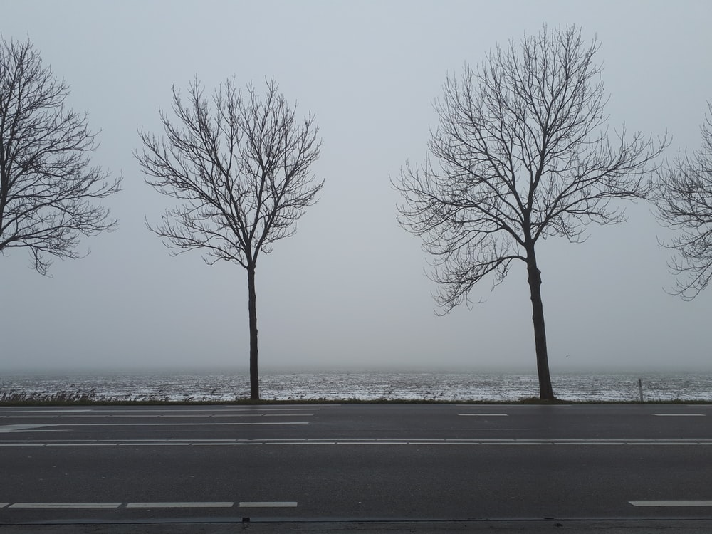 bare tree near road during daytime