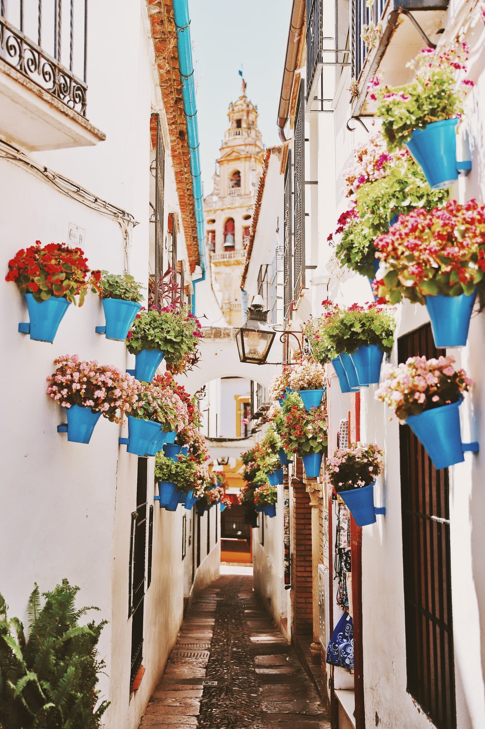 blue plant pots with plants photo