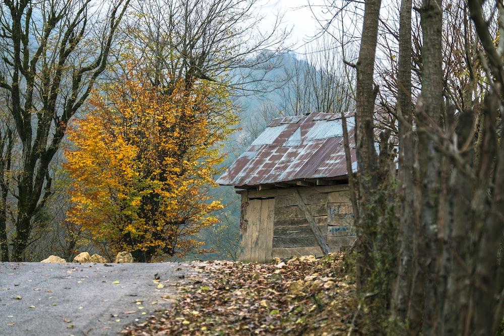 yellow tree beside house