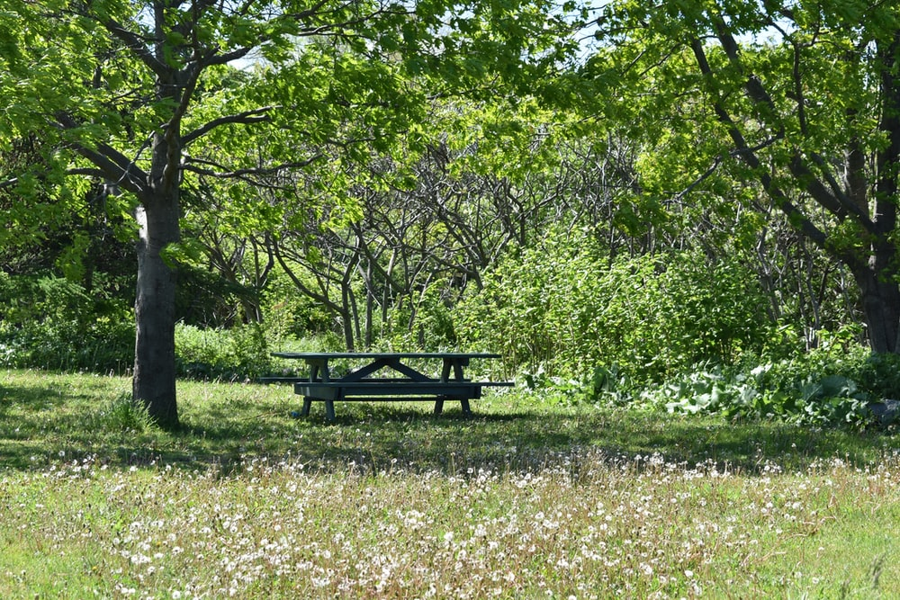 black wooden picnic table on green grass field