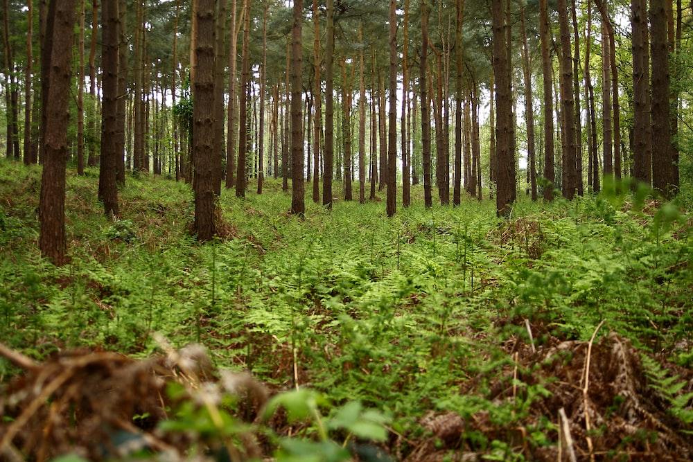 field of green trees