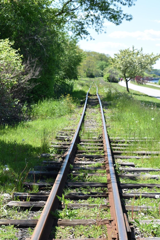 brown train trail