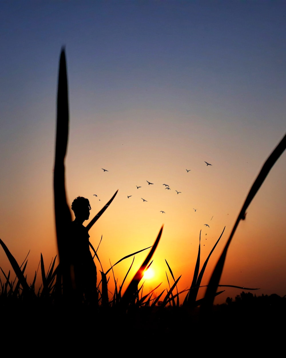 silhouette of man standing on grass