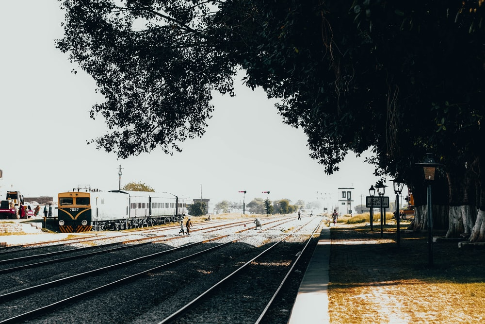 green tree beside railway