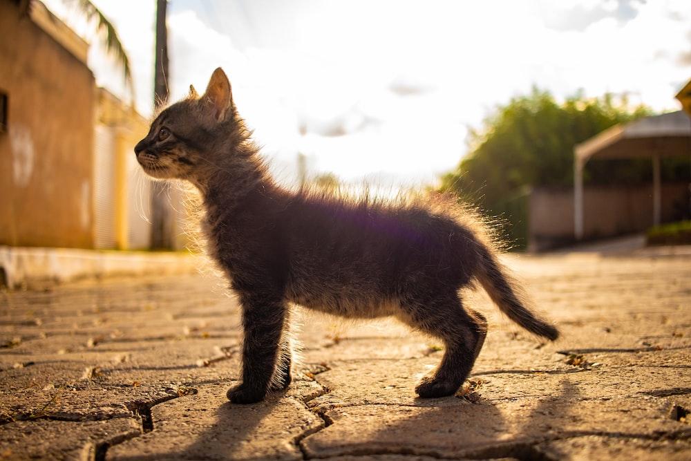 tabby kitten on gray pavement