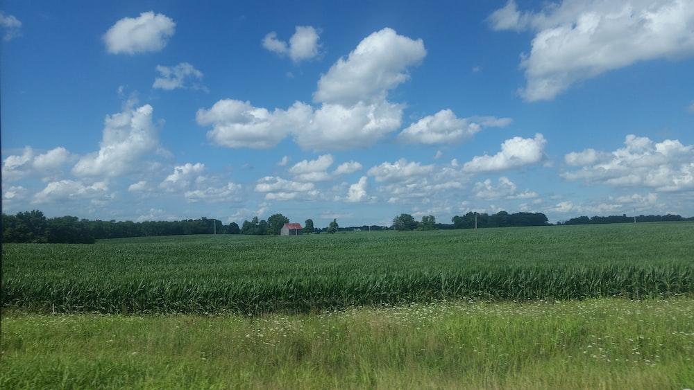 brown barn in green crops field