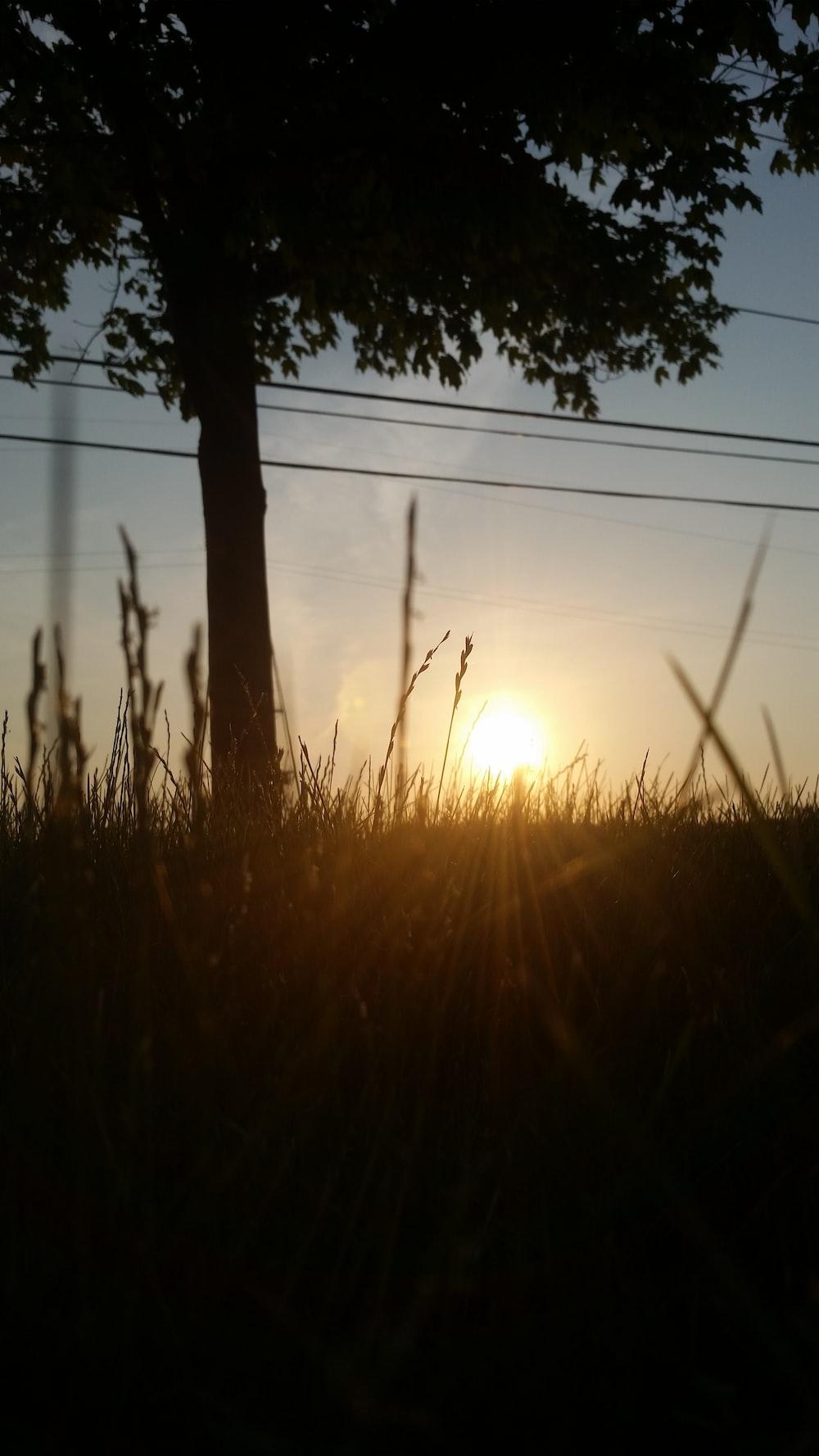 grass across sun photo