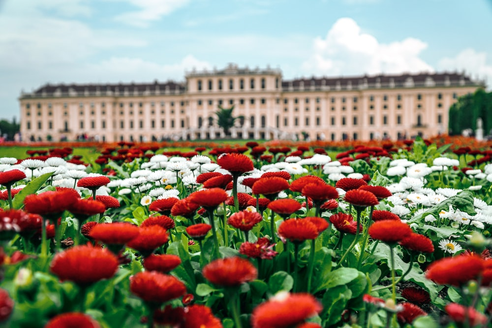 red and white flowered field in front of palace