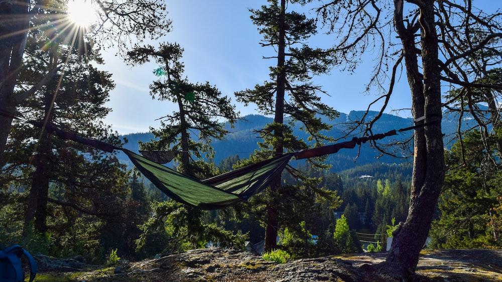 hammock in forst