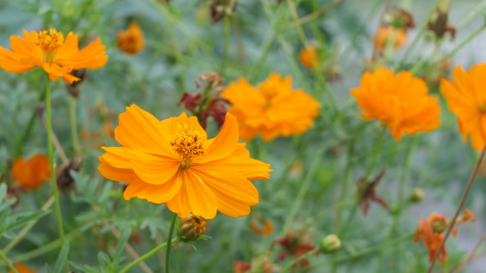 blooming orange petaled flowers