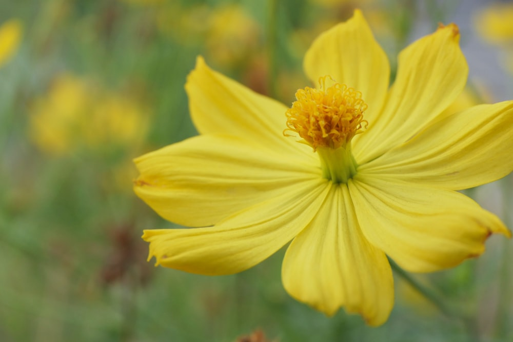 yellow petaled flower blooming