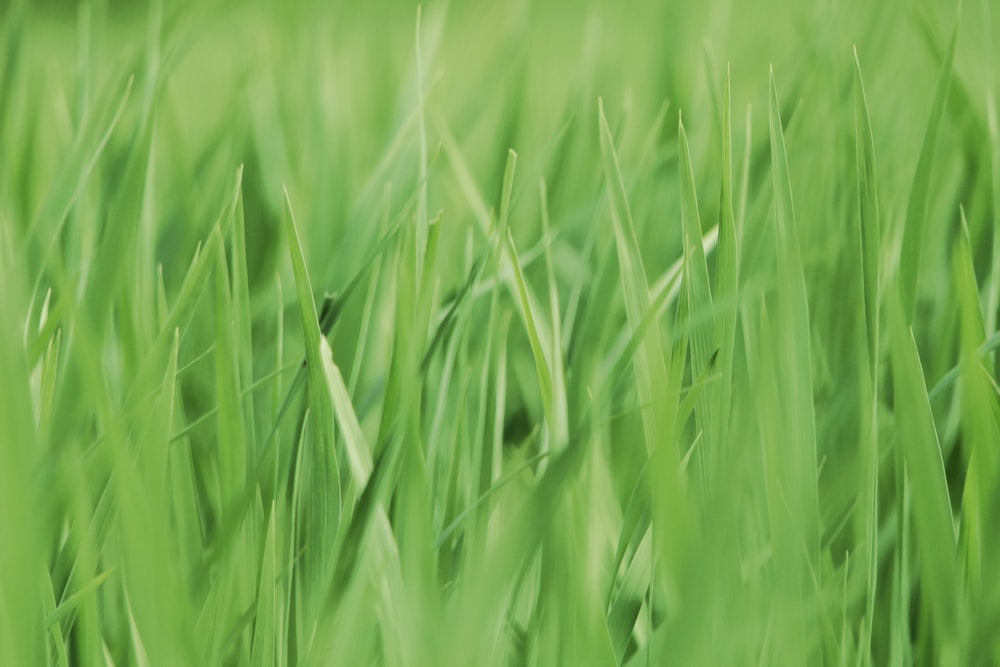 selective focus photography of green plants