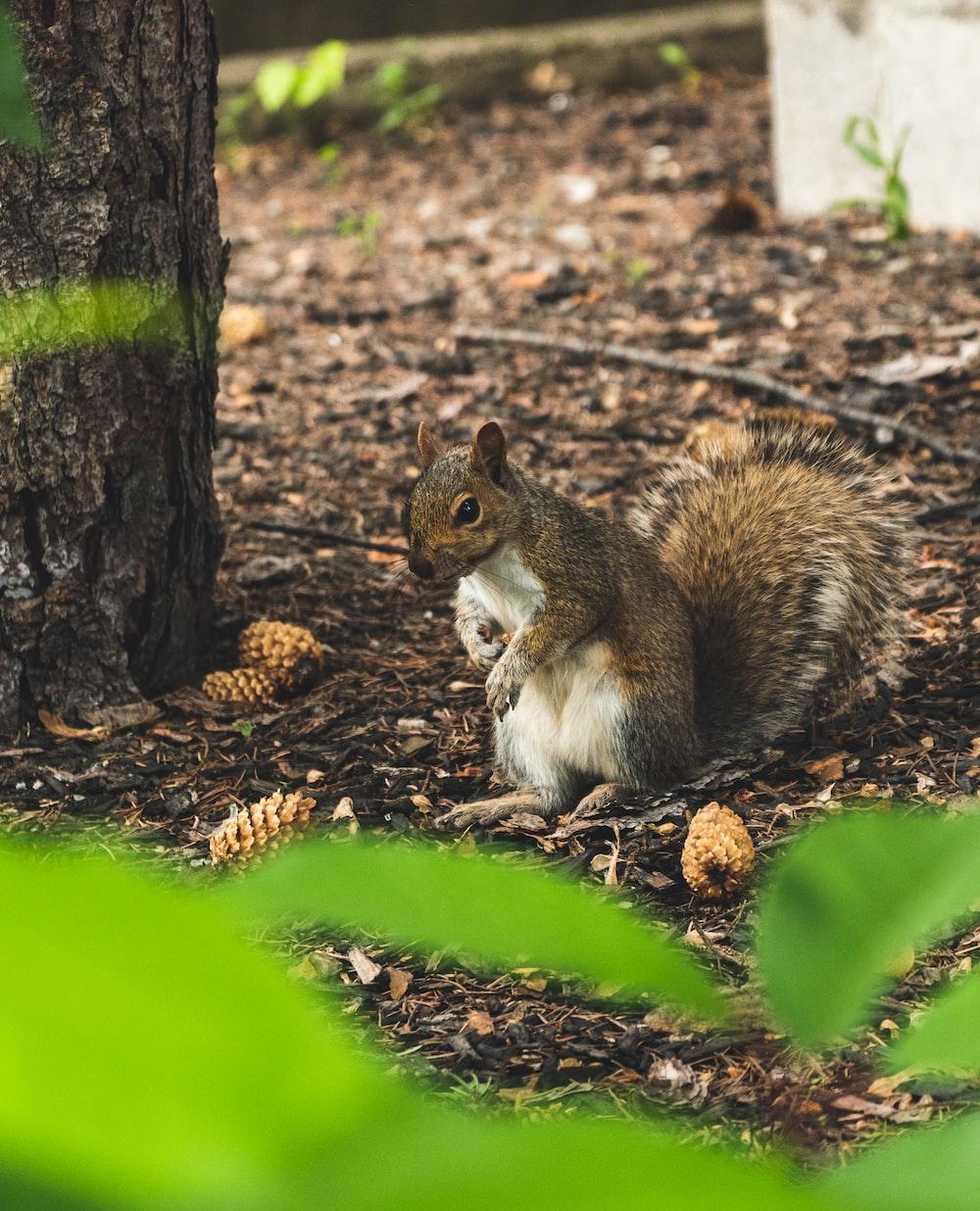 squirrel standing beside pine cones