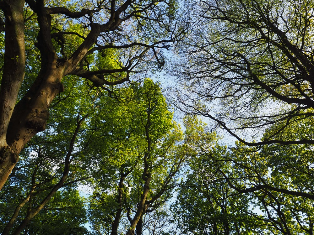 green-leafed trees under blue sky