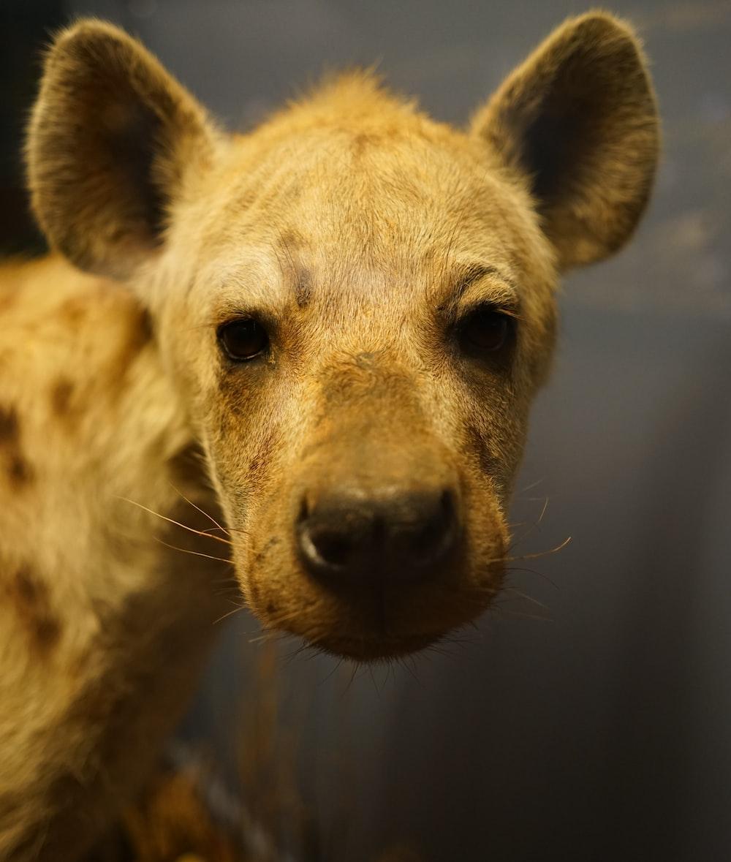 closeup photo of brown 4-legged animal