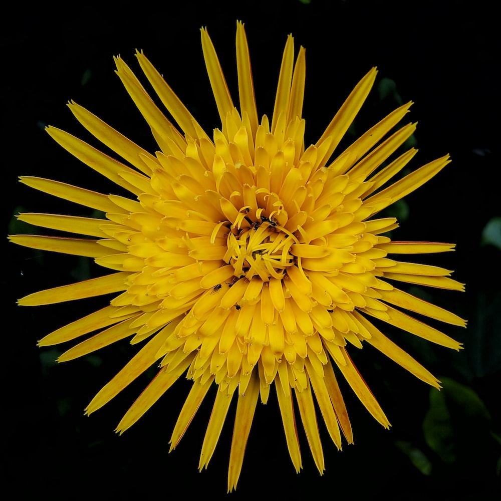 yellow-petaled flower