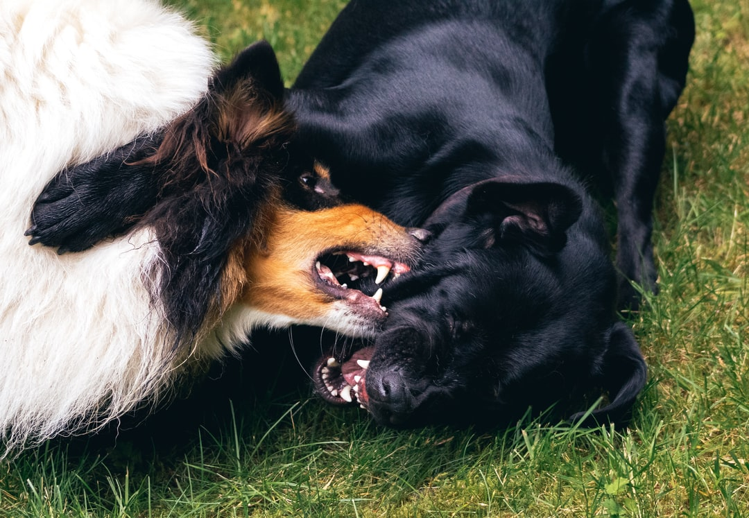 Deena and Rocky play fighting