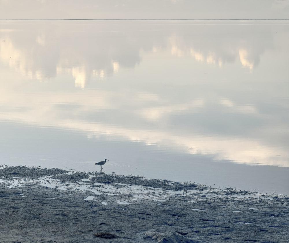 gray bird under white sky